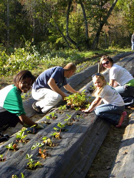 From left: Rachel King, Casey Casper, Devan Rediger and her daughter Daylen Rediger plant strawberries for a Green Highlands project. Photo by Tatiana Smithson.