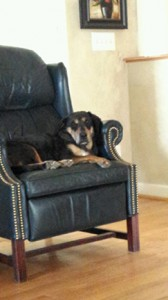 Dog resting on a chair. Contributed by Brooke Allen.